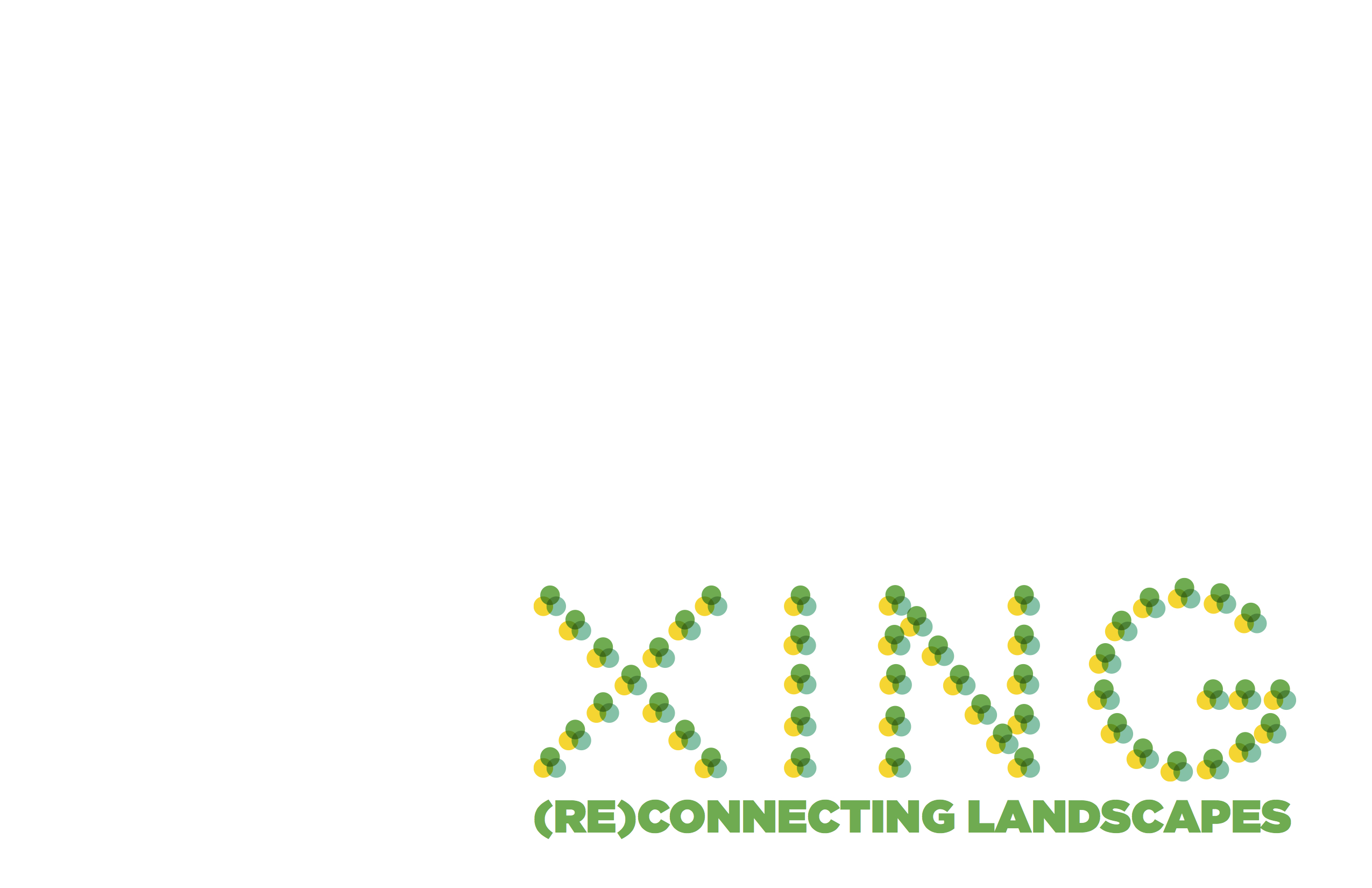 XING Portfolio (Title Page)